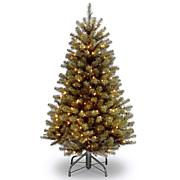 5' North Valley Spruce Tree with Clear Lights