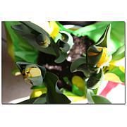 Giclee Print - Tulips I