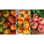 Leaf & Petal Designs 3-piece Tomato Lover's Delight Tomatoes