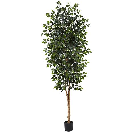 8 Ft. Ficus Silk Tree
