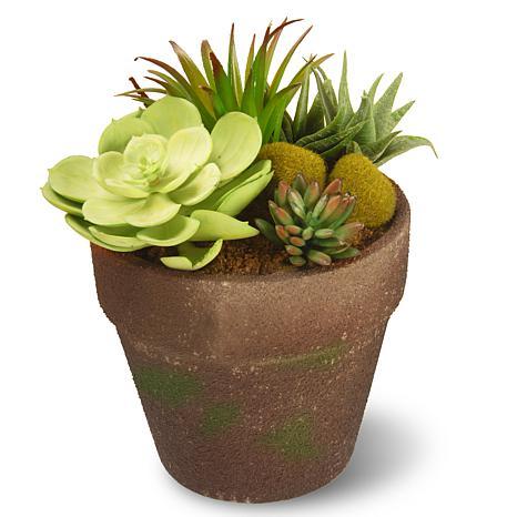 """8"""" Garden Accents Artificial Succulent Plant"""