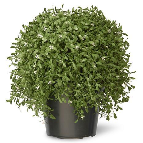 "Artificial 18"" Argentea Plant in Green Growers Pot"
