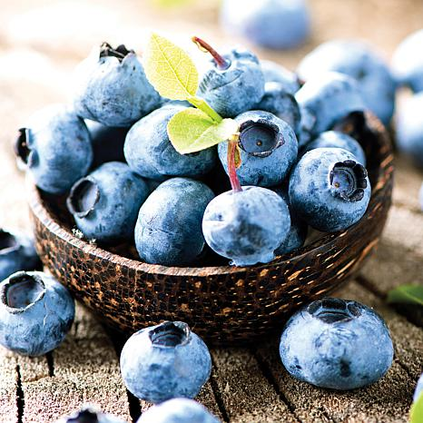 Blueberry Patch - Set of 3 Plants