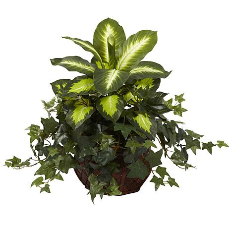 Dieffenbachia and Ivy with Decorative Planter