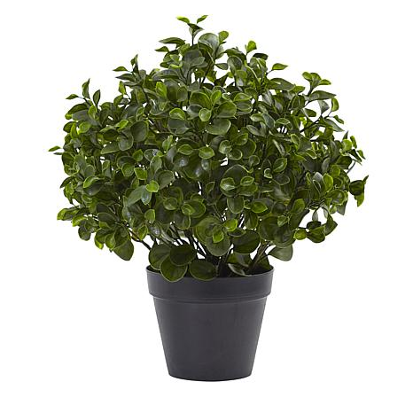 """Nearly Natural 23"""" Peperomia Plant UV-Resistant Indoor/Outdoor"""