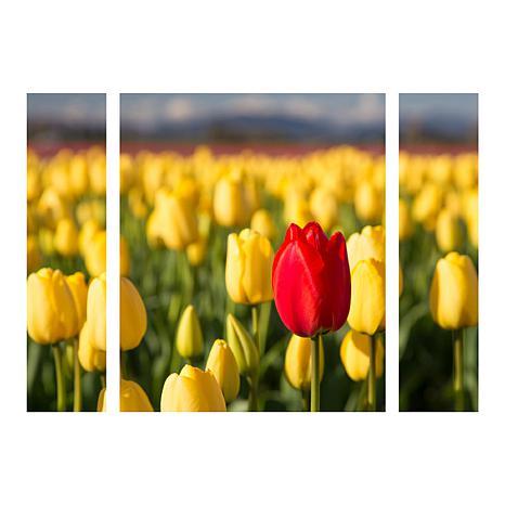 "Pierre Leclerc ""Red Tulip"" Multi-Panel Art - 24"" x 32"""