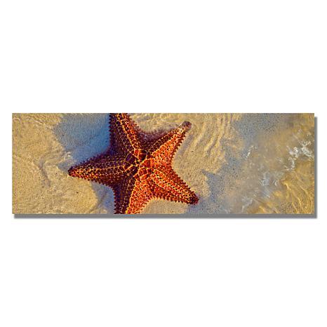"Preston ""Starfish"" Canvas Art - 8"" x 24"""