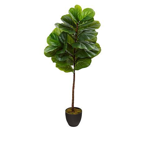 South Street Loft 4' Fiddle Leaf Tree in Nursery Planter