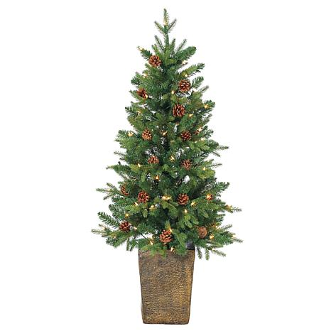 Sterling 4' Potted Hard Needle Pine Christmas Tree