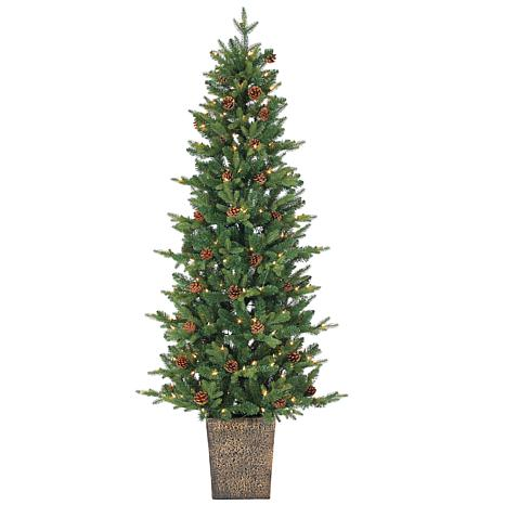 sterling 6 potted hard needle georgia pine christmas tree - Potted Christmas Tree