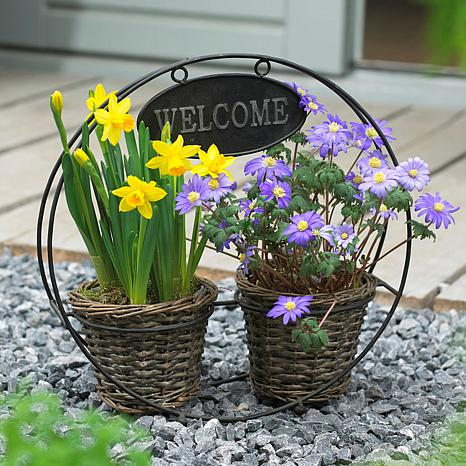 Welcome Container Garden Set of 25 Bulbs