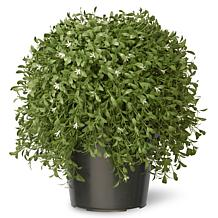 1-1/2' Artificial Topiary Argentea Plant