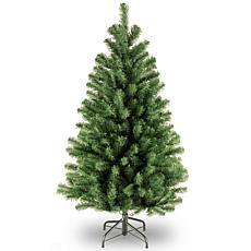 4' North Valley® Spruce Tree