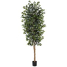 8 Ft. Ficus Silk Tree