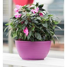 Bloem 2-Gallon Dura Cotta Plant Bowl - 11-3/4""
