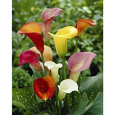 Callas Mixed Colors Set of 8 Bulbs