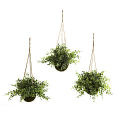 Eucalyptus, Maiden Hair and Berry Hanging Basket Set of 3