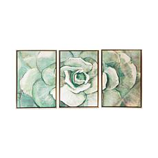 Gallery 57 Succulent Triptych 16 x 24 Set of 3 Floating Frame Canvas