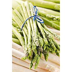 GMO Free Asparagus Jersey Giant Set of 12 Roots