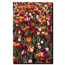 "Kurt Shaffer ""Multi-Colored Tulips"" Print - 18"" x 24"""