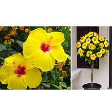 Leaf & Petal Designs 1-piece Chatty Cathy Hibiscus Tree