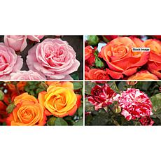 Leaf & Petal Designs 4-piece Summer Color Mini Rose Set