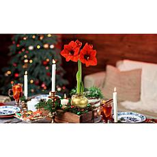 Leaf & Petal Designs Wax-Dipped Amaryllis Bulb - November Delivery