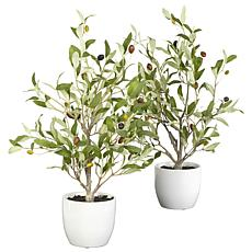 "Nearly Natural 18"" Olive Tree with Vase  Set of 2"