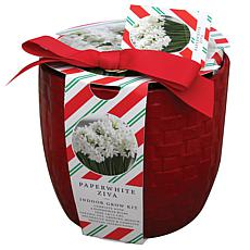 Paperwhite Kit with Farm House Red Basket Weave Ceramic Planter