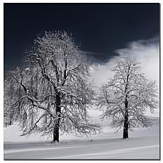 """Philippe Sainte-Laudy """"White Nature"""" Print"""