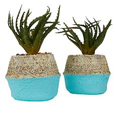 Set of 2 Faux Aloe Plants