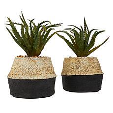 Set of 2 Faux Aloe Plants