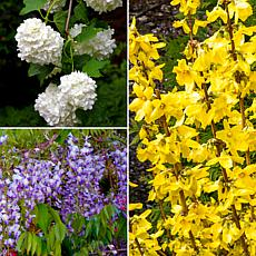 "Shrub Garden For Pollinators 4"" Potted Rocketliners® 3-Pack of Plants"
