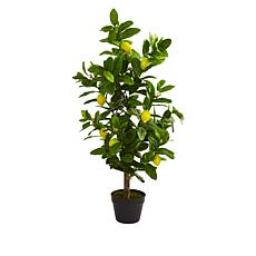 South Street Loft 3' Lemon Tree in a Starter Pot