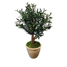 "South Street Loft 32"" Olive Tree in a Terracotta Pot"