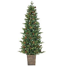 Sterling 6' Potted Hard Needle Pine Christmas Tree
