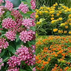 VanZyverden Asclepias Save The Monarchs Oasis Set of 11 Roots