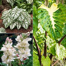 VanZyverden Color Your Garden White Collection 12-piece Bulb Set
