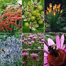 VanZyverden Gardening For Birds and Butterflies 28-piece Bulb Set
