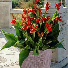 VanZyverden Lucifer Cannas Kit w/ Planter, Planting Medium and Roots