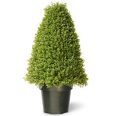 Winter Lane 2-1/2' Artificial Topiary Boxwood Tree