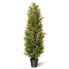 Winter Lane 6' Artificial Topiary Argentea Plant