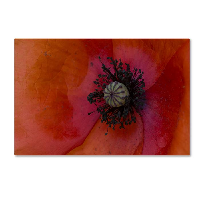 "Kurt Shaffer ""Poppy Detail"" Canvas Art"