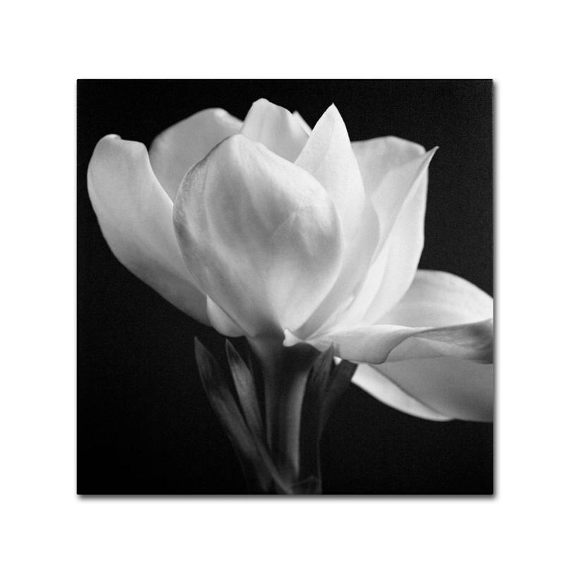 "Michael Harrison ""Gardenia"" Canvas Art"